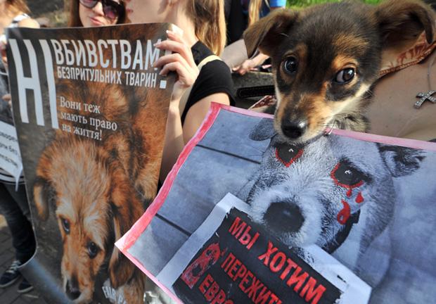 Ativista ucrânia animais (Foto: SERGEI SUPINSKY / AFP)