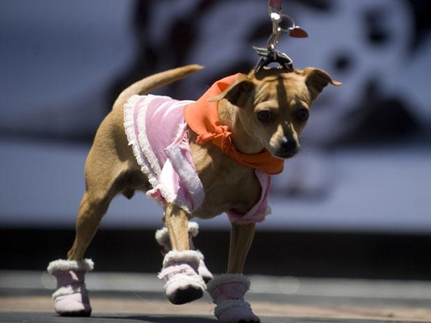 Desfile de cães na Guatemala (Foto: AFP Photo/Johan Ordonez)