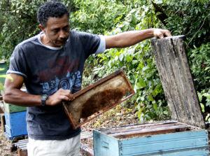 O apicultor José Luís confere o que sobrou da colmeia (Foto: Fabio Rodrigues/G1)