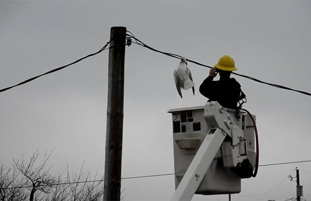 Em janeiro deste ano, uma gaivota foi resgatada após ficar com a cabeça presa em cabos de energia em Dartmouth, no Canadá.  A ave não ficou ferida e foi solta logo depois. (Foto: Reprodução)