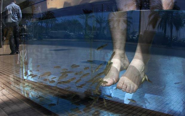 Peixes fazem trabalho de pedicure ao comer a pele morta. (Foto: Enrique Calvo/Reuters)