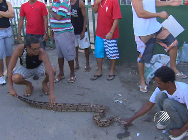 Cobra em ponto de nibus (Foto: Reproduo/TV Bahia)
