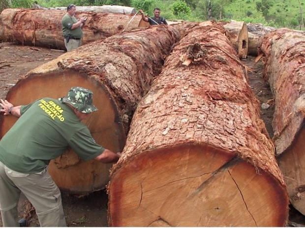 Ibama apreende madeira de Castanheira-do-Pará (PA) (Foto: Roberto Neves (Ibama)/Divulgação)