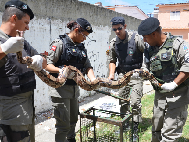 Cobra é capturada em terreno de pousada na Praia de Carapibus, na Paraíba (Foto: Walter Paparazzo/G1)