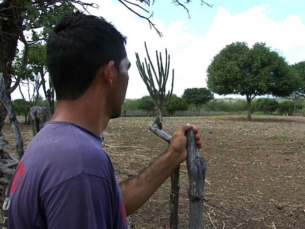 Agricultores da região do Cariri sofrem perdas de safra de milho e feijão com a estiagem (Foto: TV Verdes Mares/ Reprodução)