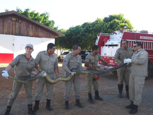 Equipe do Corpo de Bombeiros foi acionada para capturar cobra de 3 metros (Foto: Divulgação/Corpo de Bombeiros)