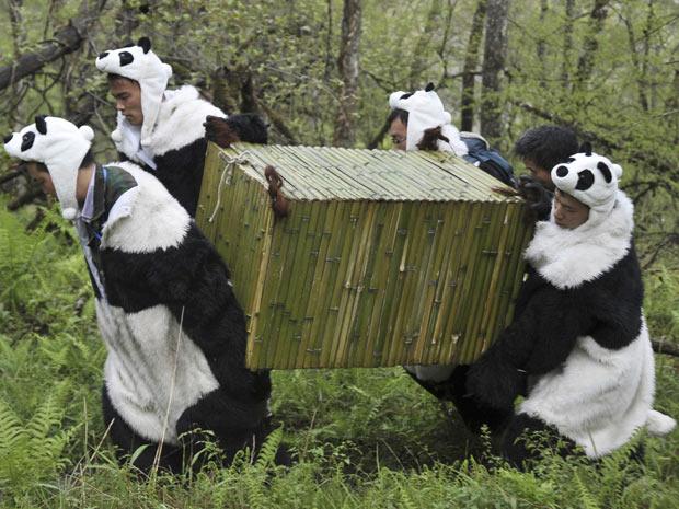 Natureza Pesquisadores Se Vestem De Panda E Ajudam Ursos