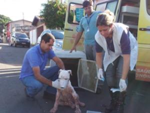 Após chamado da imprensa, Centro de Controle de Zoonoses resgata Pit Bull em Piracicaba (Foto: Nikolas Capp/ G1)