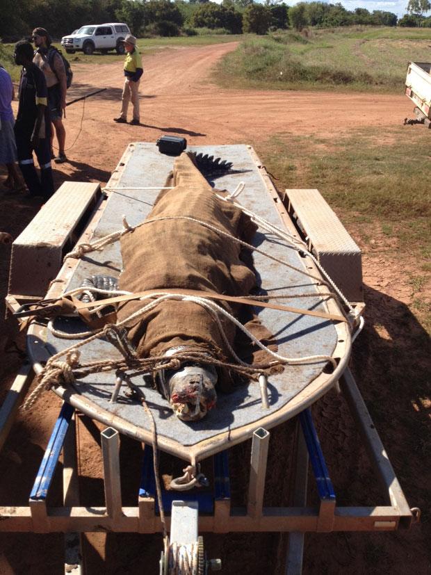 Crocodilo de 4,40 metros foi capturado no norte da Austrália (Foto: AFP/Parques de Vida Selvagem do Território Norte)