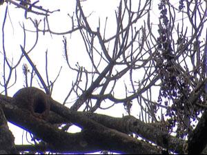 Árvores da 313 Norte perderam folhas e secaram depois de receber aplicação, segundo a Novacap, produto químico (Foto: Reprodução/TV Globo)
