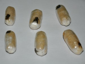 Jovem que engoliu 11 cápsulas de cocaína em MS é encaminhado para Unei (Foto: Fernando da Mata/G1 MS)