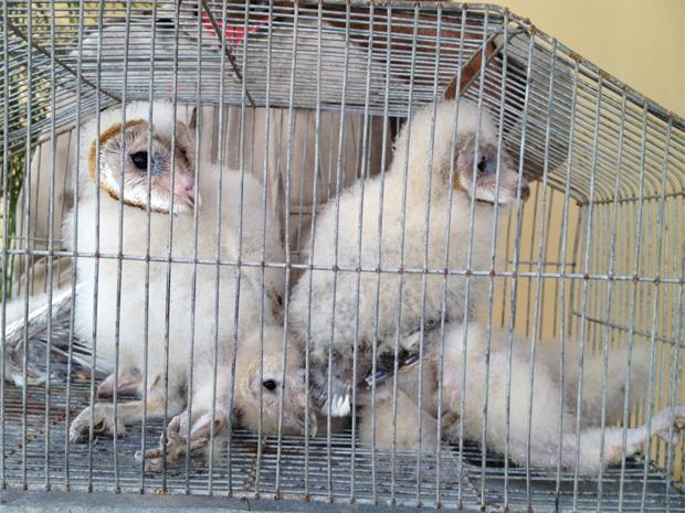 Cinco filhotes foram resgatados no forro de  um apartamento (Foto: Walter Paparazzo/G1)
