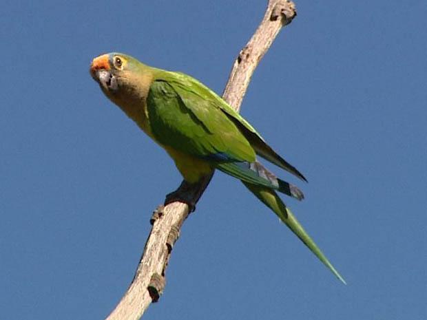 Área verde da USP chegou a abrigar 130 espécies de aves até incêndio em agosto de 2011. (Foto: Reprodução EPTV)