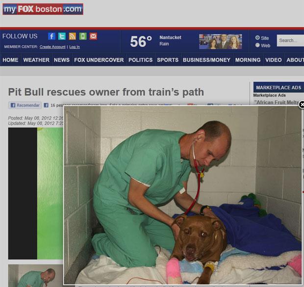 A pit bull Lilly recebe tratamento de um veterinário (Foto: Reprodução/My FOX Boston)