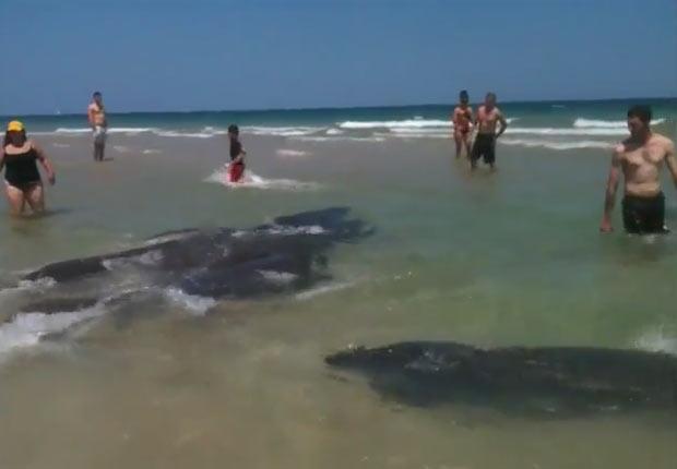 Grupo de peixes-boi virou atração no domingo em praia de Fort Lauderdale. (Foto: Reprodução/YouTube)