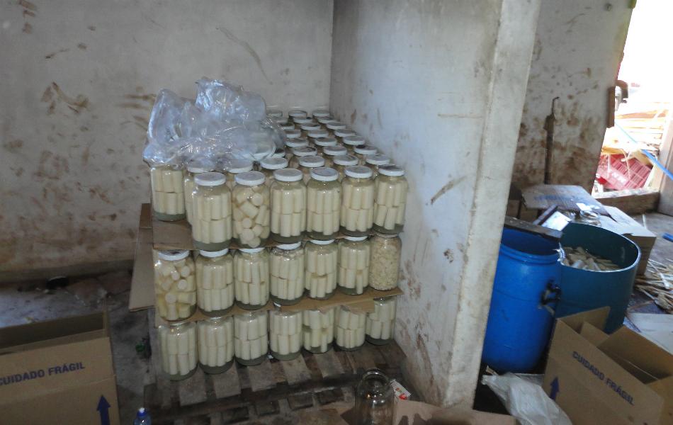 Em uma casa no bairro Boa Vista, em Pilar do Sul, local foram encontrados 258 vidros, com capacidade para 1,8kg, contendo palmito Jussara, espécie protegida devido ameaça de extinção.
