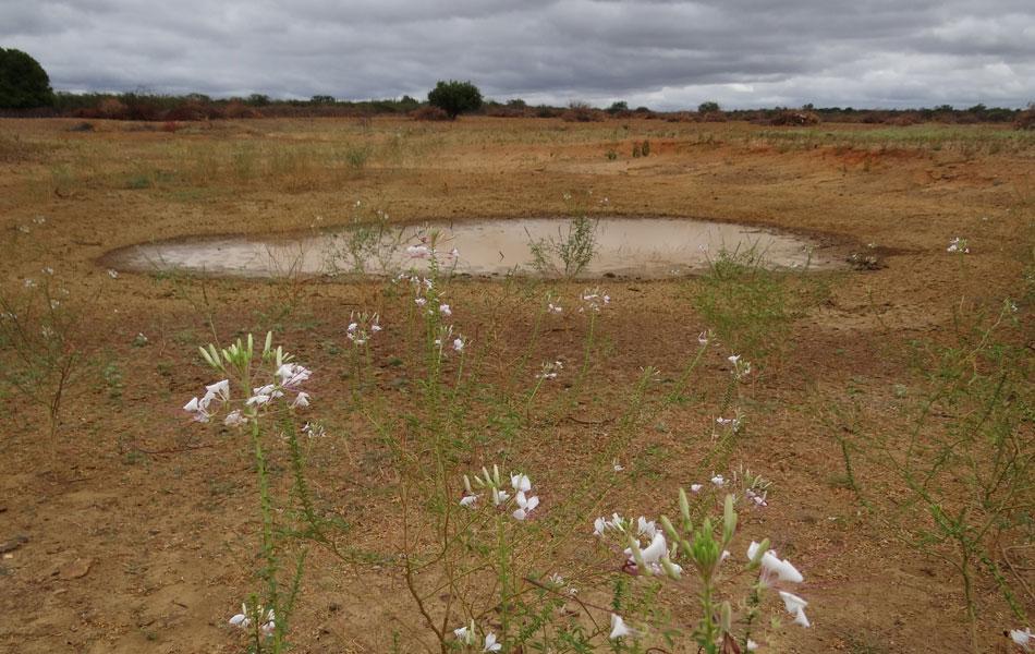 Fonte de água virou lama em Lagoa Grande. Estiagem fez município decretar situação de emergência.