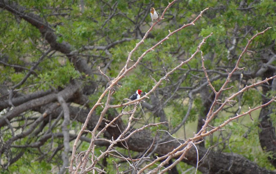 Pássaro dá um colorido especial aos galhos secos.