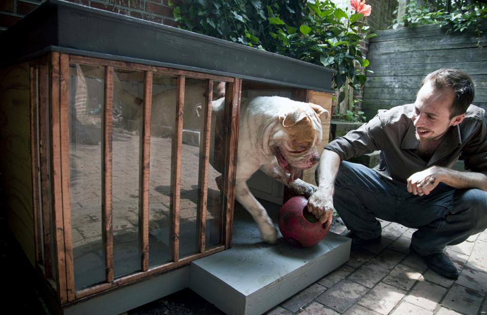 O arquiteto Brian Pickard projetou uma casa com vidros para o cão de seu vizinho, Thor, na Filadélfia.