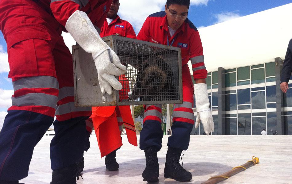 3 de agosto - A Polícia Ambiental foi acionada para levar a ave para ser solta em outra área