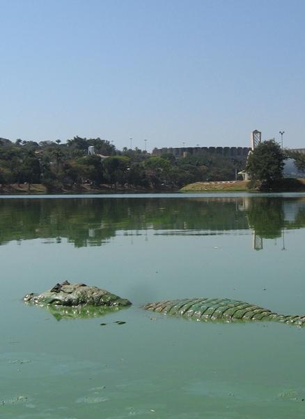 Jacaré é fotografado nas águas poluídas da Lagoa da Pampulha, em Belo Horizonte, nesta terça-feira (11).