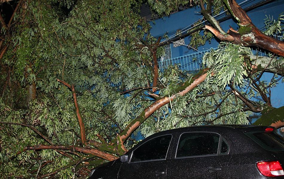 Árvores caíram e atingiram carros estacionados na Avenida Ayrão