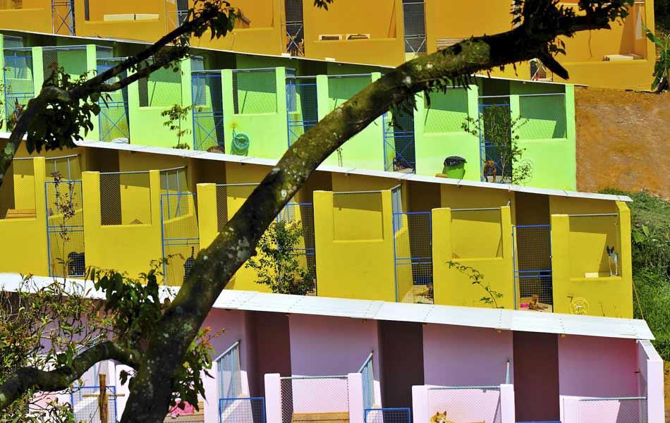 Canil do Clube dos Vira-Latas é dividido em alas com dezenas de baias cada uma