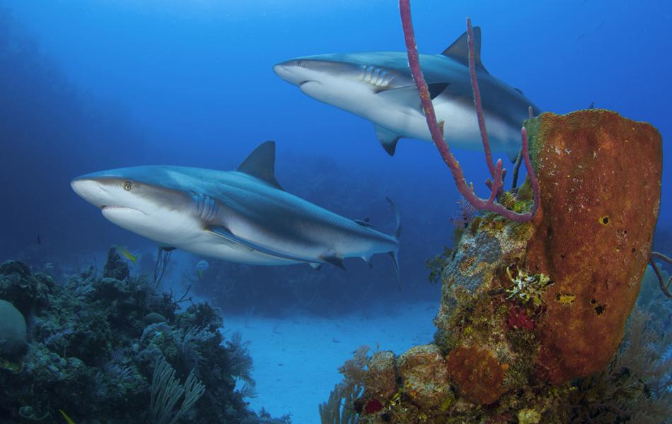 Fot grafo clica vida marinha exuberante em mais de dez for Como llegar a jardines de la reina cuba