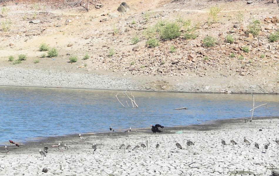 Açude em Triunfo, na Paraíba, também foi atingido pela seca e os animais estão quase sem água para beber