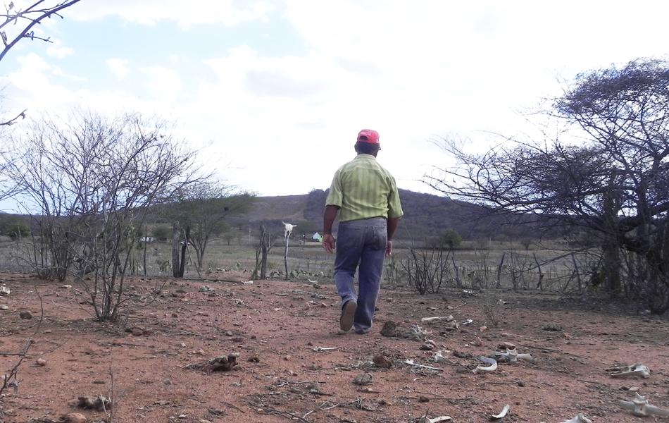Na zona rural de Monteiro, no Cariri da Paraíba, os agricultores encontram apenas os ossos do gado no local que antes era um pasto