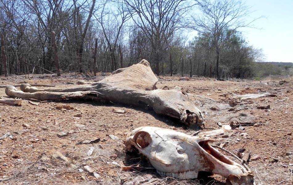 Com a seca, muitos animais acabaram morrendo de sede e de fome