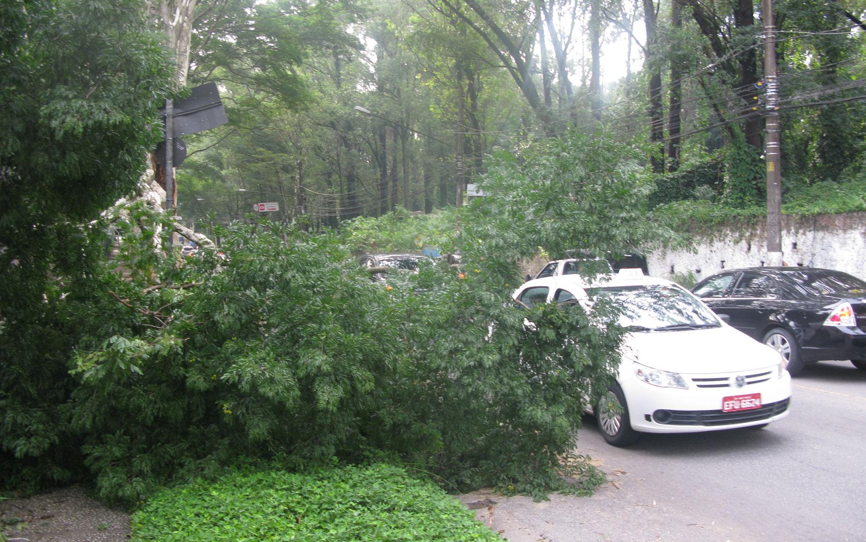 Árvore cai durante temporal, bloqueia parte de via e complica trânsito na Avenida Morumbi, na Zona Sul