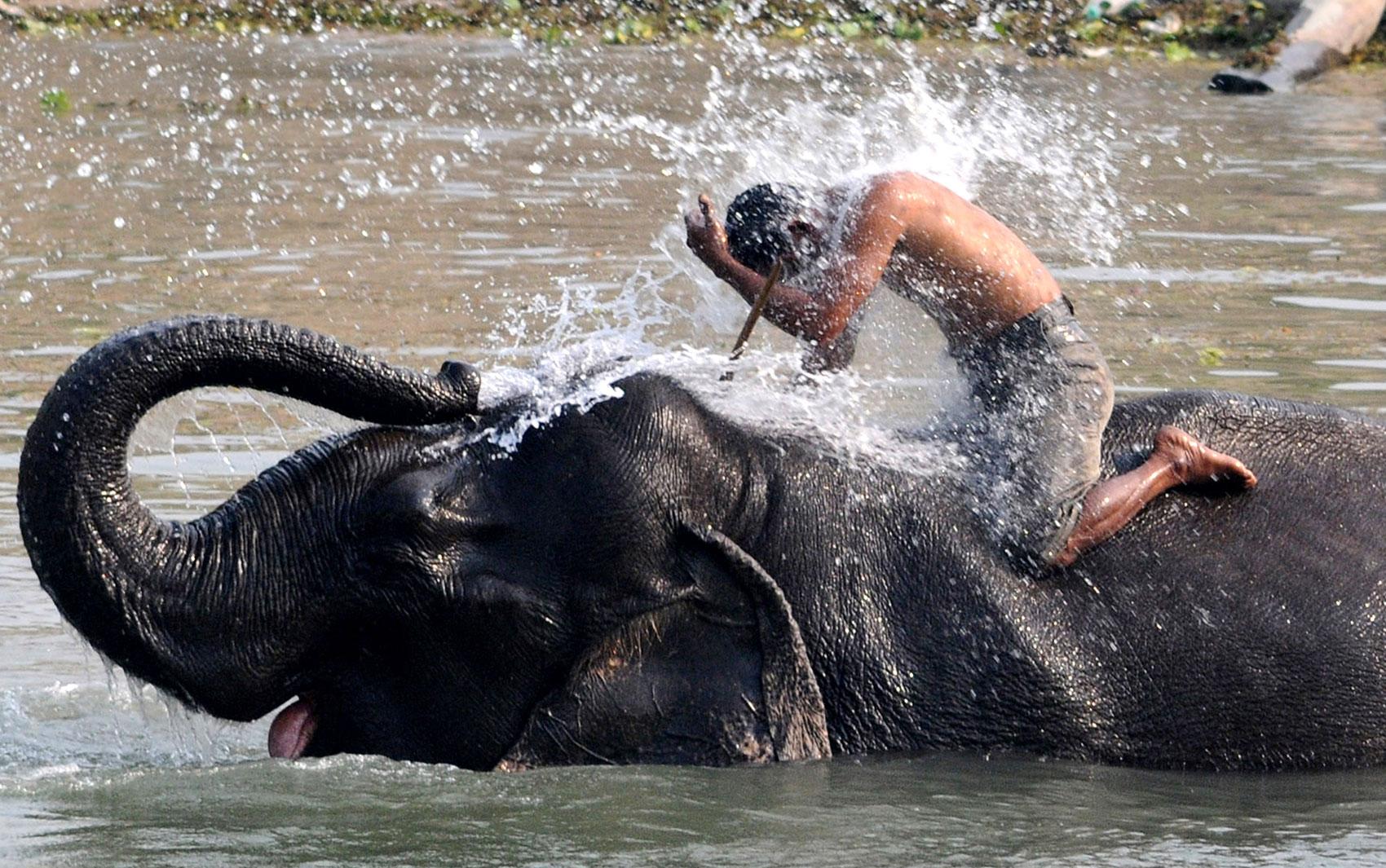 Treinador recebe um jato d'água de seu elefante, que parece rir da brincadeira durante banho no Santuário da Vida Selvagem de Pobitora, na Índia. O local oferece passeios de elefante para os visitantes.