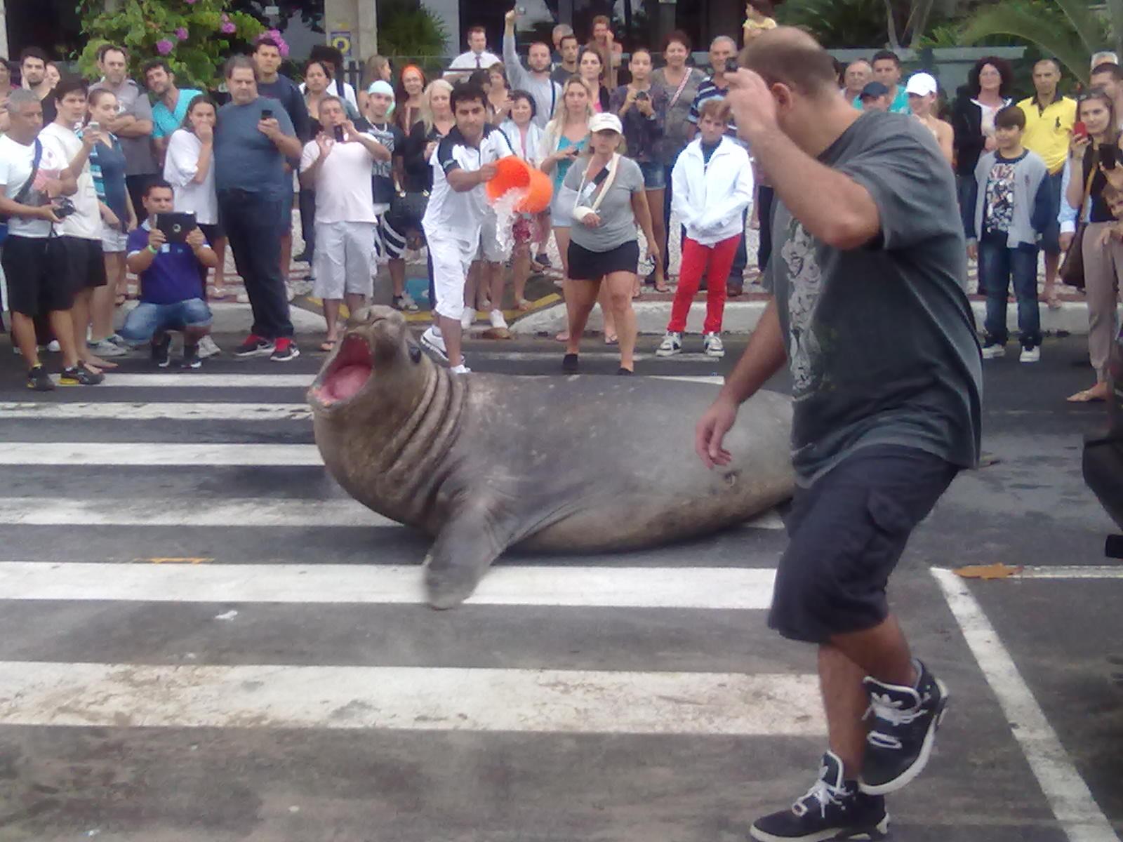 Animal marinho foi atração em Balneário Camboriú