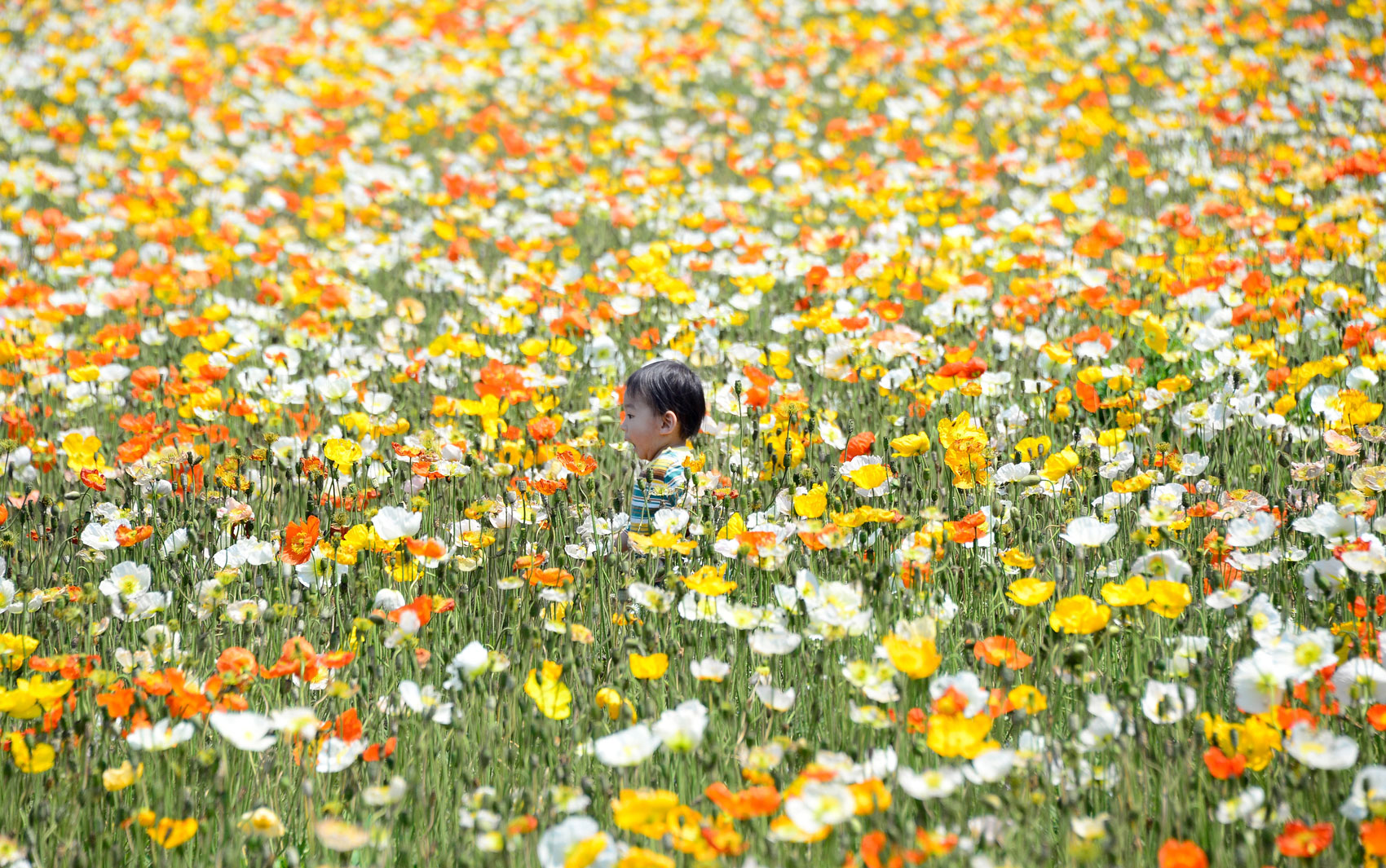 imagens jardim florido:Imagens do dia – 6 de maio de 2013 – fotos em Fotos – g1