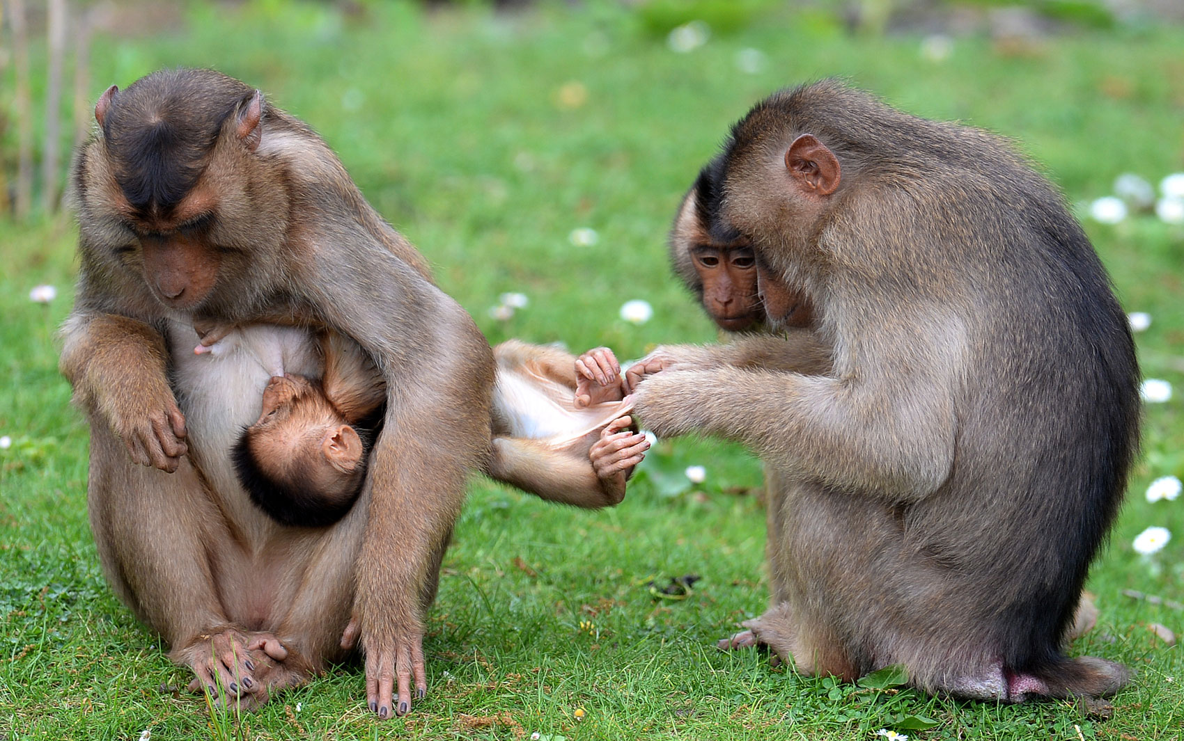 Filhotes de macaco provocam risadas em zoo alemão - fotos em Natureza ...: g1.globo.com/natureza/fotos/2013/05/filhotes-de-macaco-provocam...