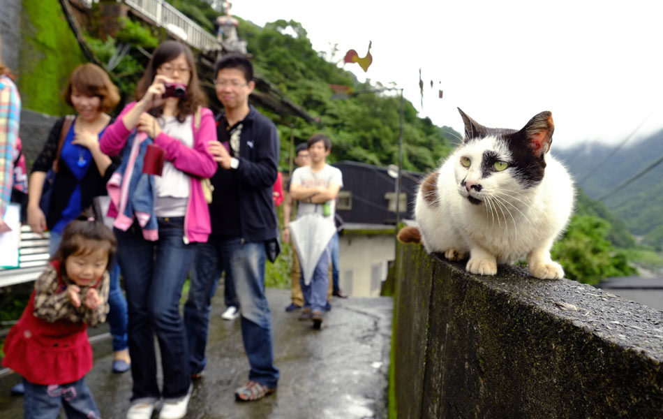 Gatos viram atração turística em Taiwan