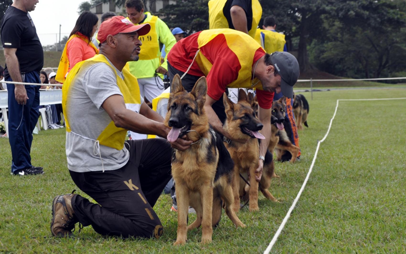 Cães perfilados para observação de juízes no Sieger 2013, em Campinas (Foto: Luciano Calafiori/G1)