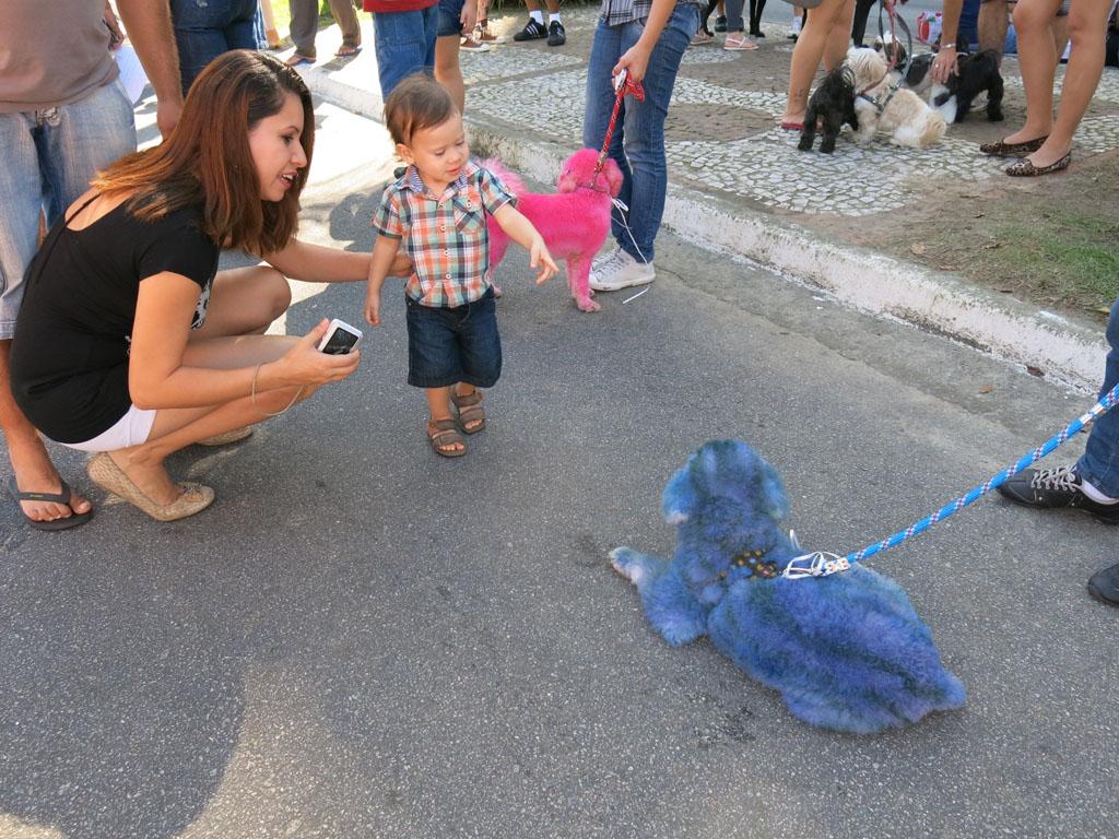 Poodles nas cores azul e rosa participaram da Cãominhada em Santos