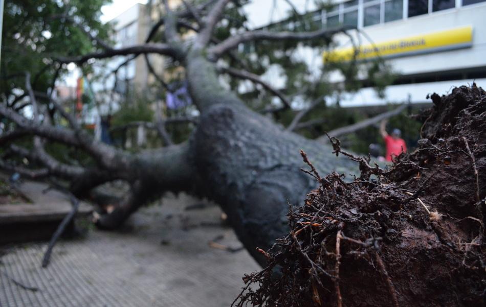 Árvore caiu na Praça José Bonifácio