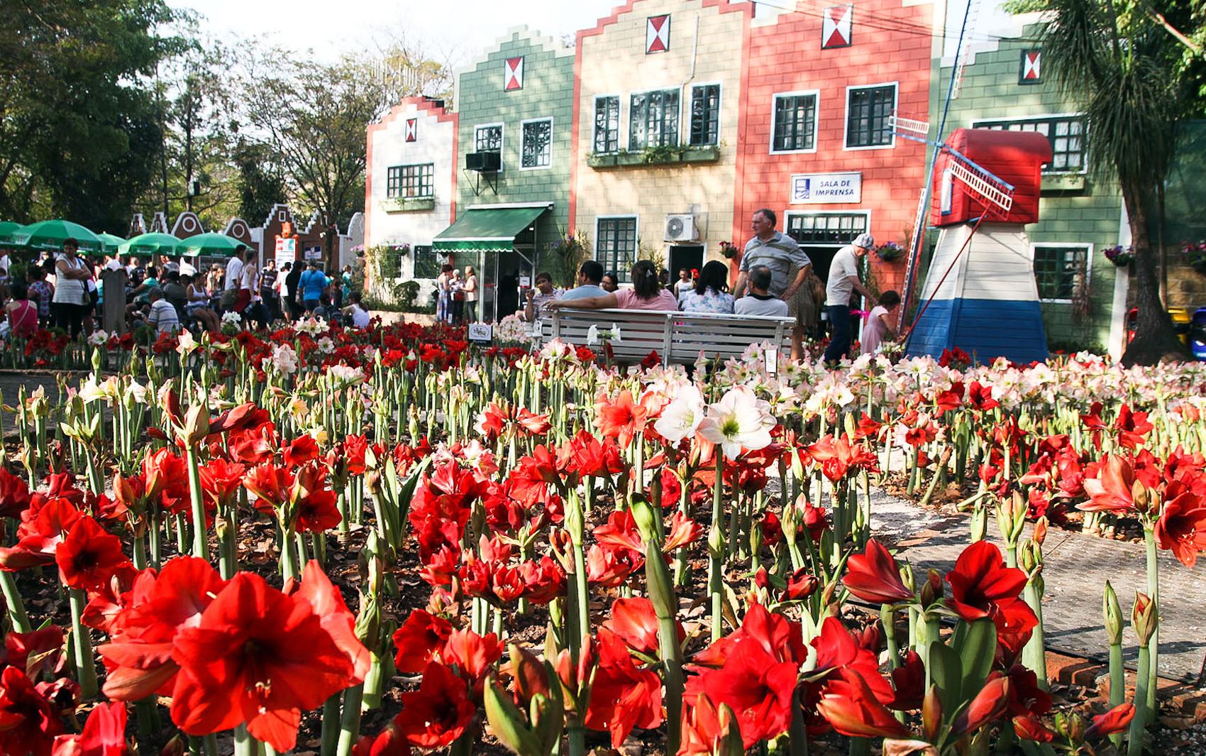 Expoflora, a maior festa de flores do Brasil é em Holambra  fotos em