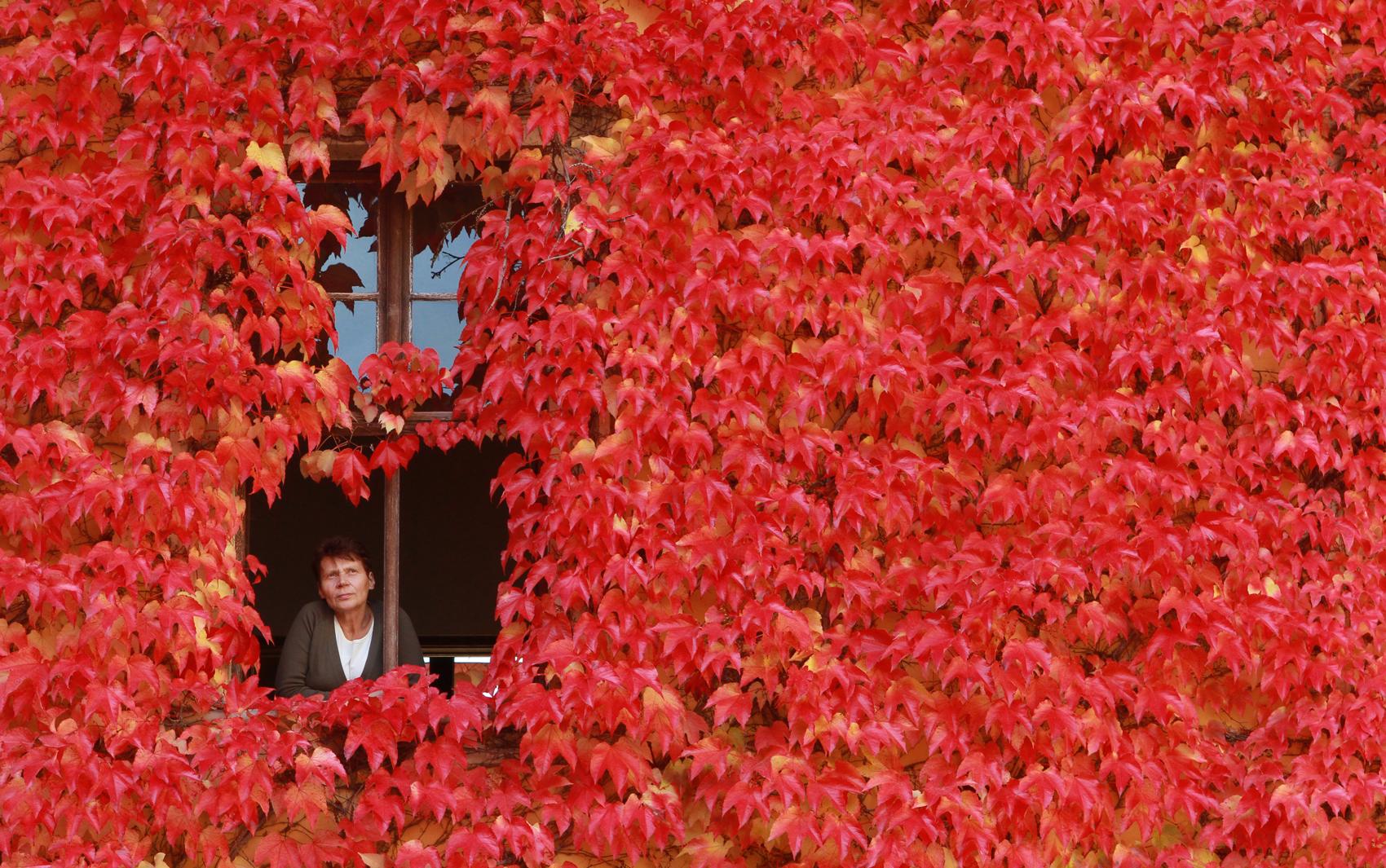 #8D2412 Mulher olha pela janela de casa coberta com folhas vermelhas em  1182 Portas E Janelas De Madeira Em Mogi Das Cruzes