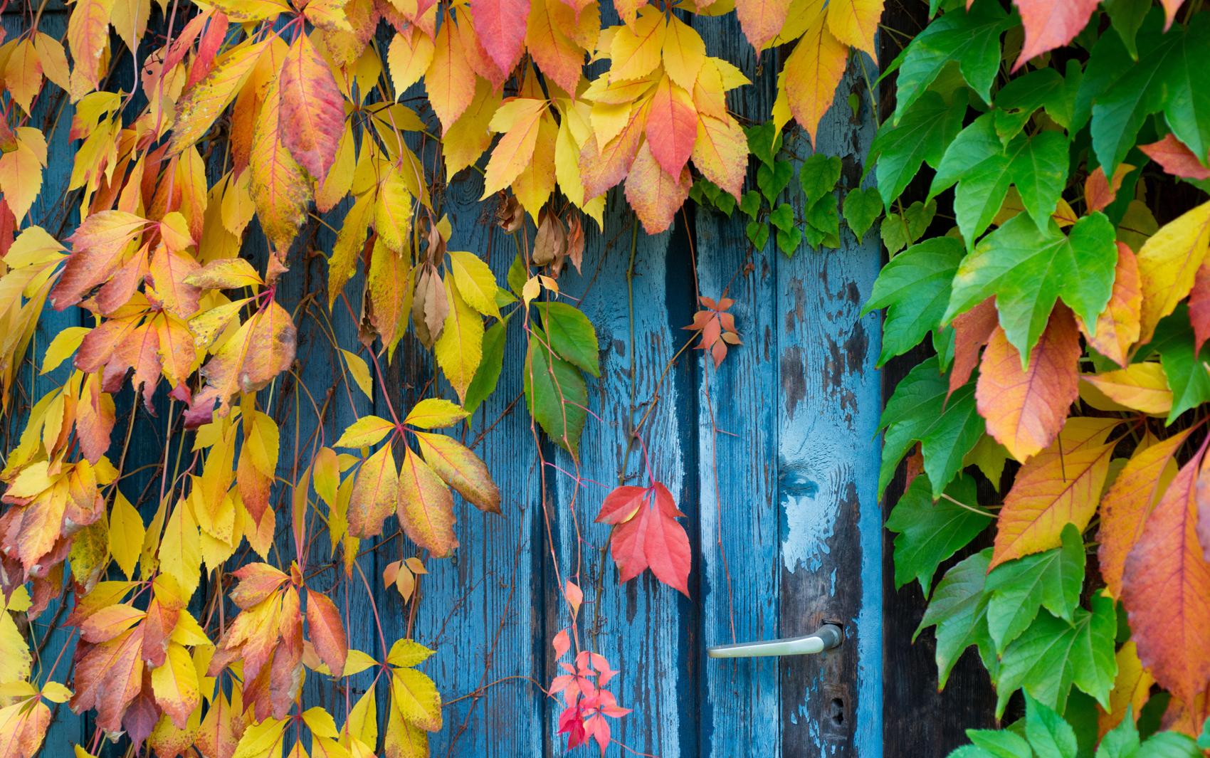 #B0941B  coloridas cobrem parcialmente uma porta em Sieversdorf na Alemanha 1182 Portas E Janelas De Madeira Em Mogi Das Cruzes