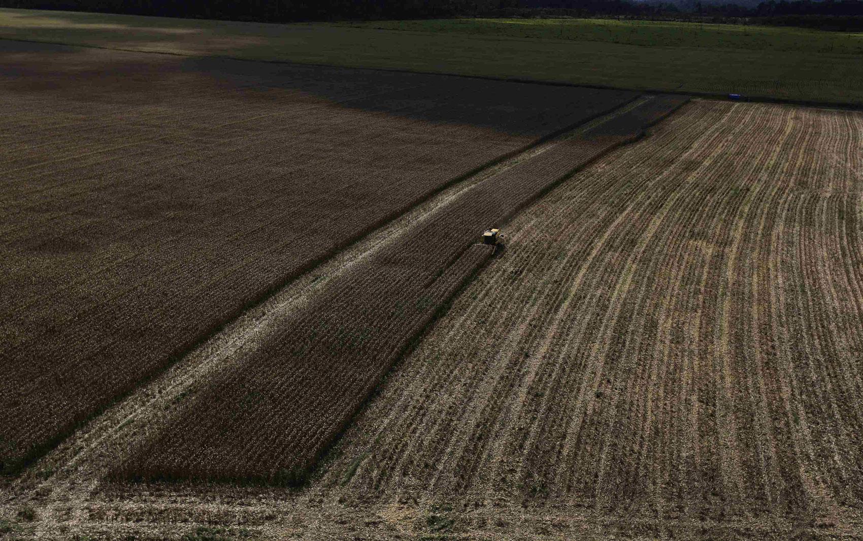 Ipê amarelo é visto em meio à floresta perto de Novo Progresso (PA  #897142 1700x1065