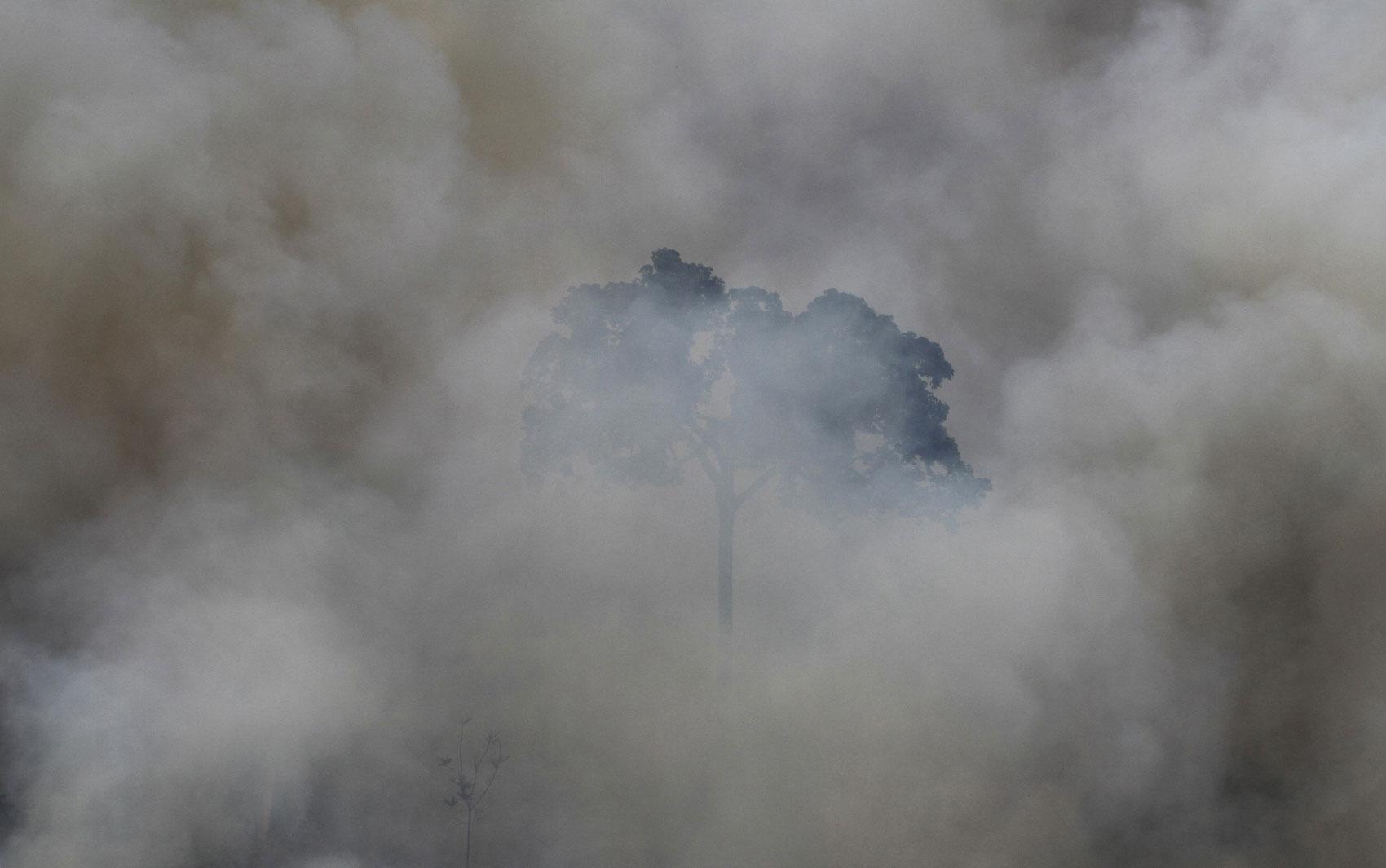 Árvore é vista em meio à queimada de área de floresta para o uso na agricultura perto de Novo Progresso (PA). Os fotógrafos Nacho Doce e Ricardo Moraes, da agência Reuters, viajaram pela Amazônia registrando formas de desmatamento. Foto de 23/9/2013.