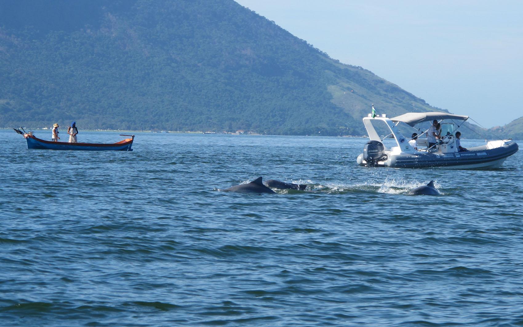 ONG Instituto Boto Cinza intermedia relação dos pescadores com o animal em extinção