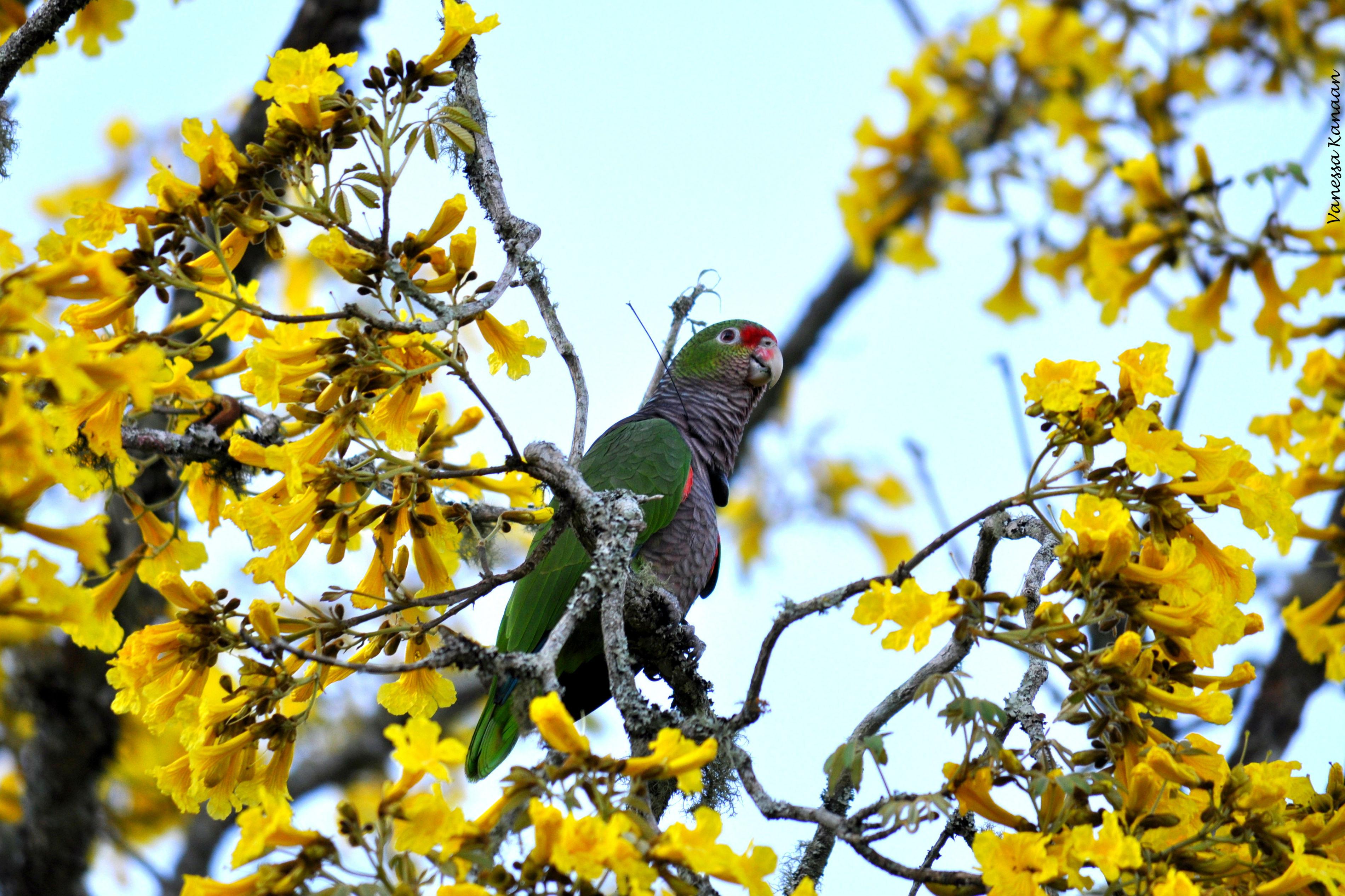 Aves são monitoradas na natureza