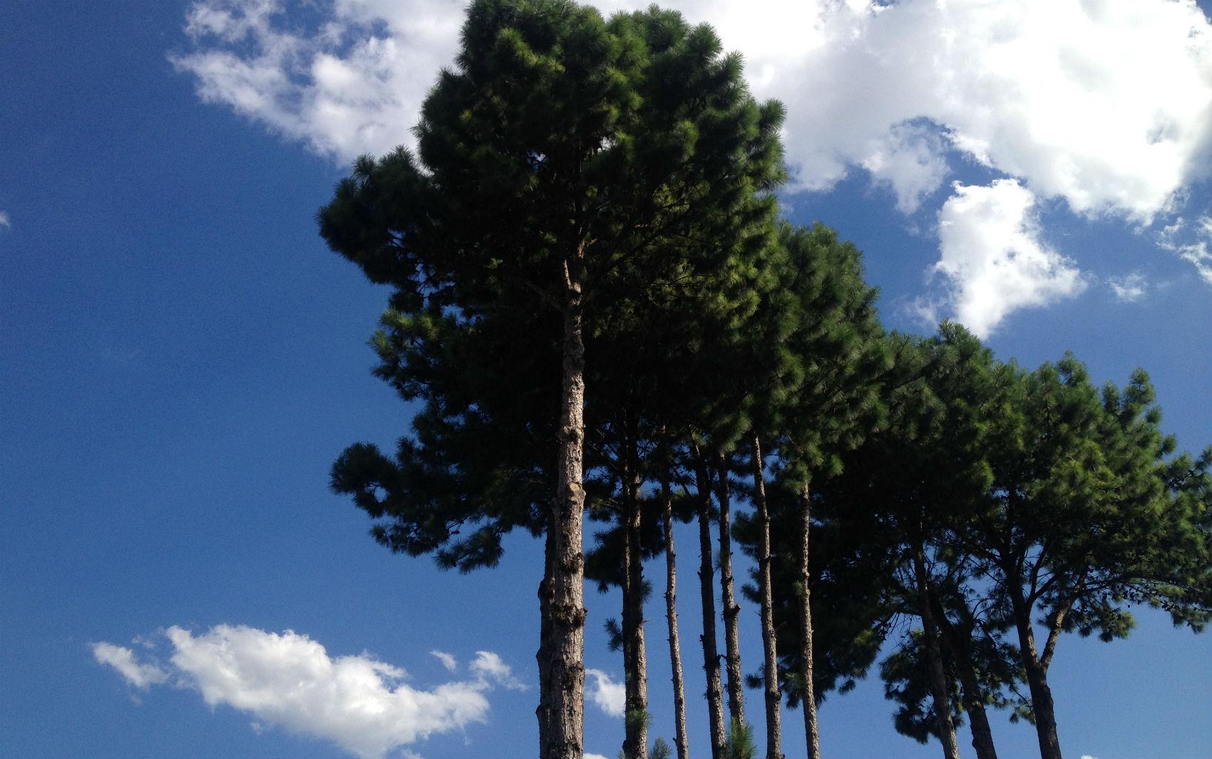 Temperatura chegou aos 35,2°C na tarde desta quinta-feira em Curitiba