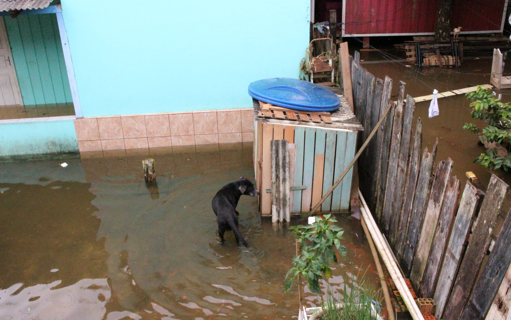 Cachorro fica ilhado ao ter casa alagada em quintal no Mocambo