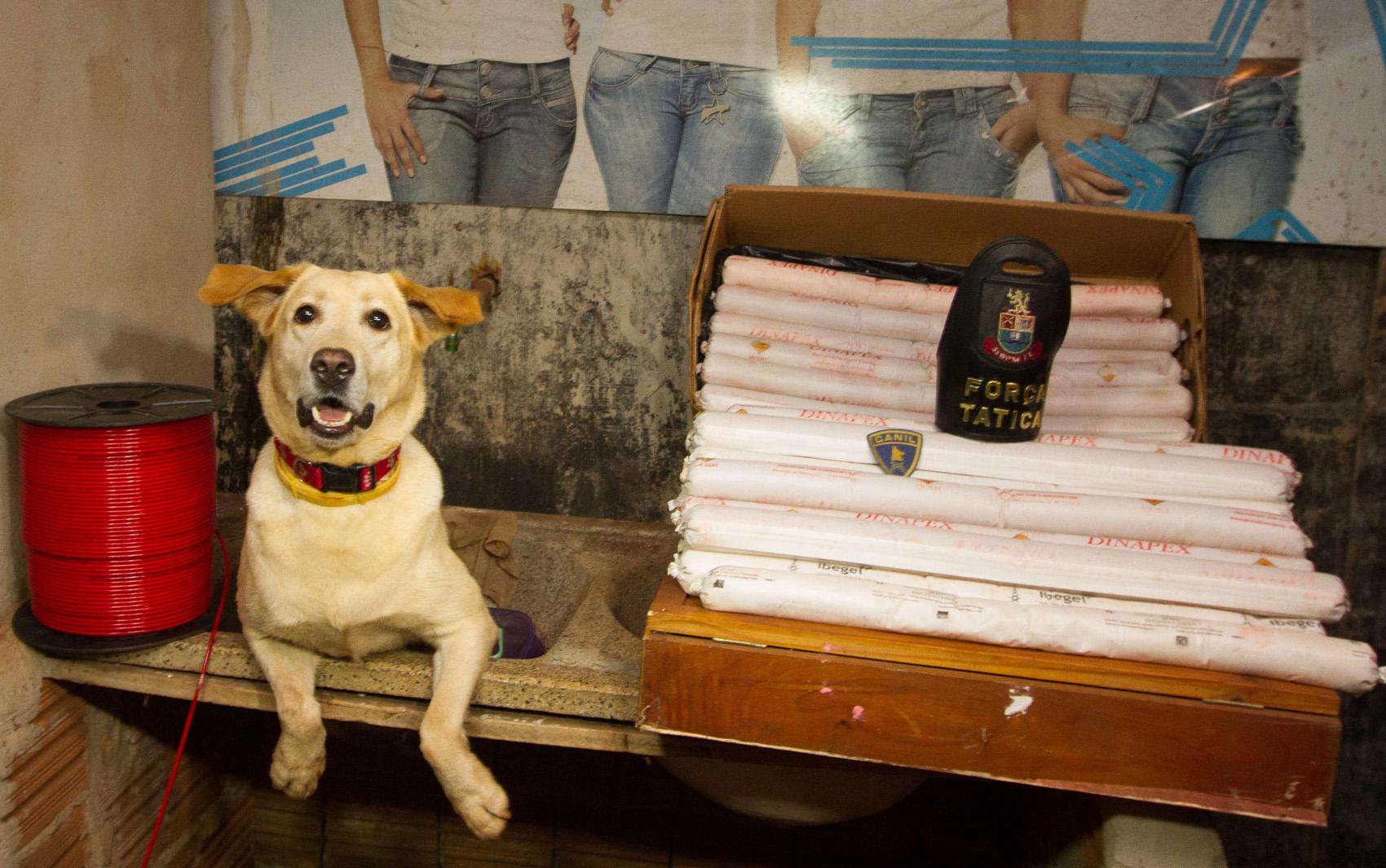 Com a ajuda da cadela Mel, policiais de Ribeirão Preto encontraram 70 bananas de dinamite em duas caixas cheias de explosivos além de dois kg de droga em favela da cidade